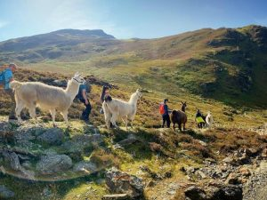 Walk a Llama through Newlands Valley in The Lake District – 2 People Sharing 1 Llama
